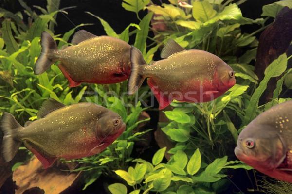 Onderwater landschap aquatisch planten water natuur Stockfoto © prill
