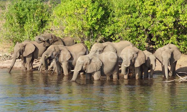 Grup filler Botsvana manzara Stok fotoğraf © prill