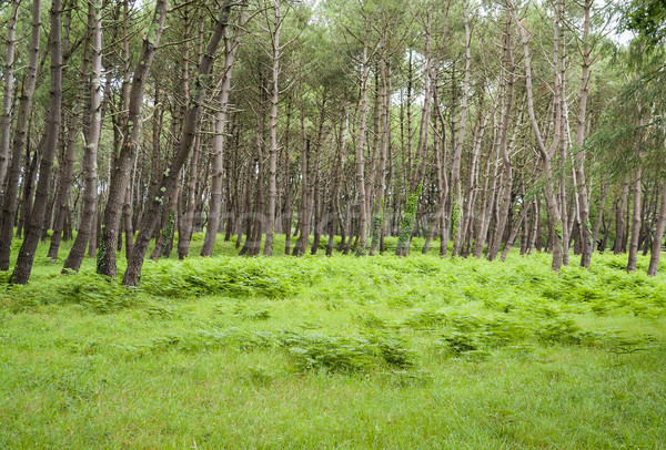 forest scenery in Brittany Stock photo © prill