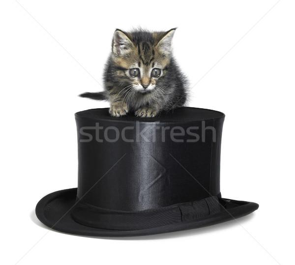 cute kitten on top hat Stock photo © prill