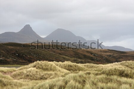 overgrown dunes and hills Stock photo © prill
