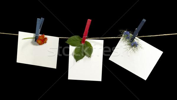 Waslijn bloemen witte blad vast Stockfoto © prill
