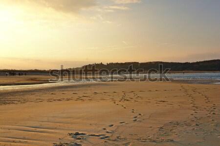 Crane Beach illuminated by the evening sun Stock photo © prill