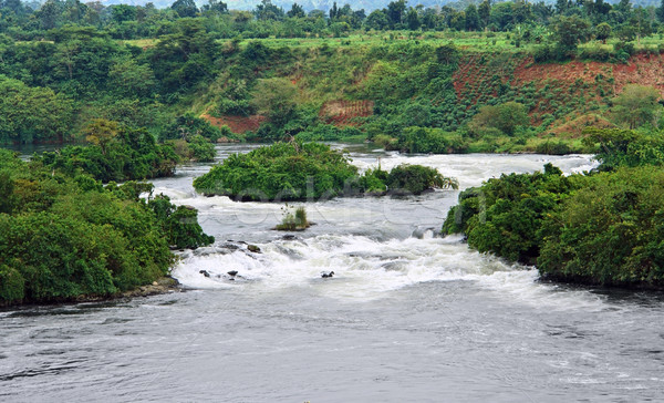 River Nile scenery near Jinja Stock photo © prill