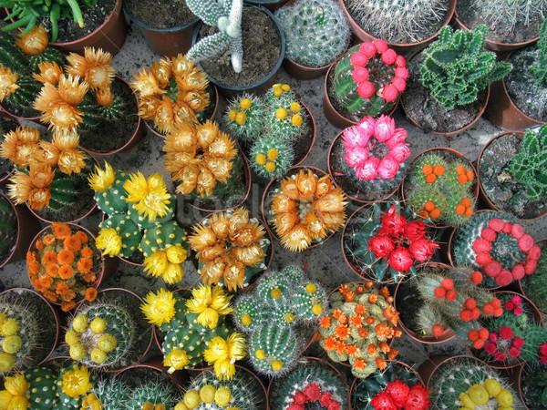 цветения красочный цветок природы саду фон Сток-фото © prill