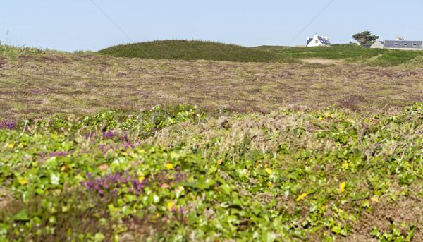 Pointe du Van in Brittany Stock photo © prill