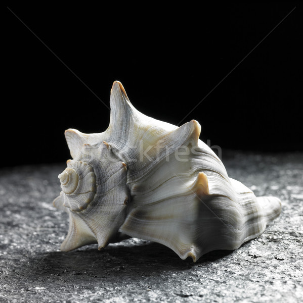 seashell Stock photo © prill
