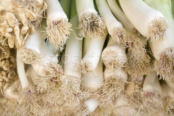 leek and celery detail Stock photo © prill