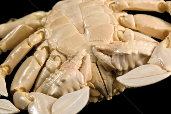 detail of a moon crab Stock photo © prill