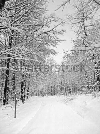 Inverno floresta pormenor neve tempo Foto stock © prill