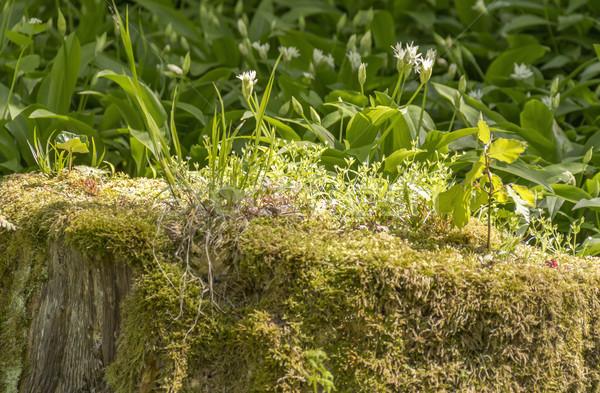 Vegetation Baumstamm Boden decken Stock foto © prill