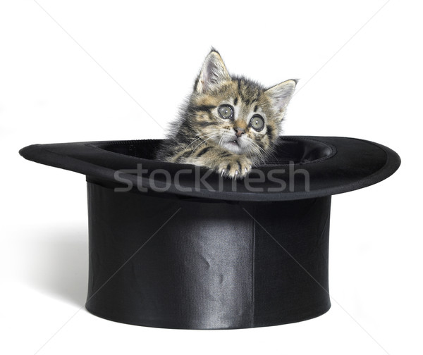 kitten looking out of a black top hat Stock photo © prill