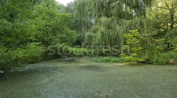 overgrown tarn in the Liliental Stock photo © prill