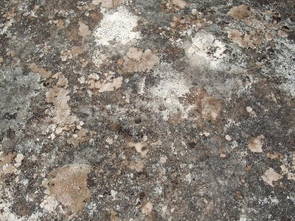 weathered lichen background Stock photo © prill