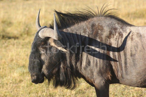 Botswana savane paysages Afrique nature Safari Photo stock © prill