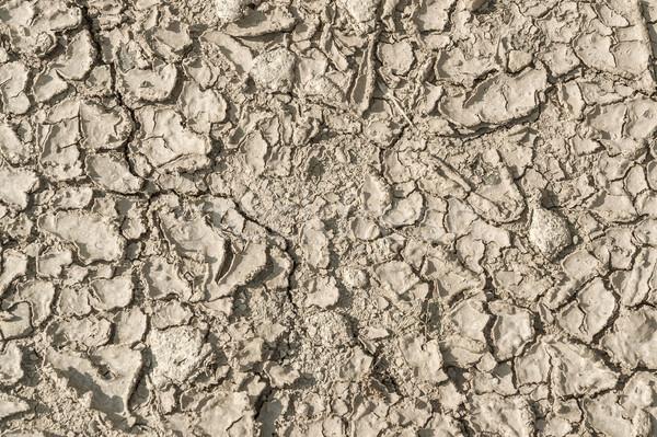 Secar solo superfície ver ensolarado Foto stock © prill