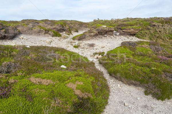 Farbenreich Vegetation herum Landschaft Sommer Anlage Stock foto © prill