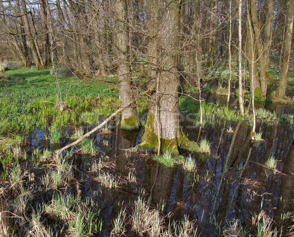 bog at early spring time Stock photo © prill