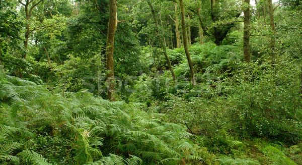 Bos west manier landschap rond Schotland Stockfoto © prill