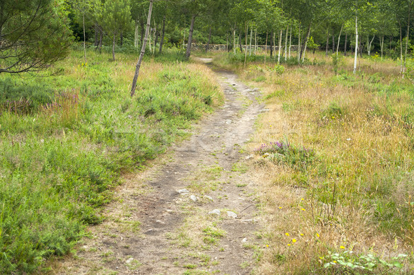 footpath in a forest Stock photo © prill