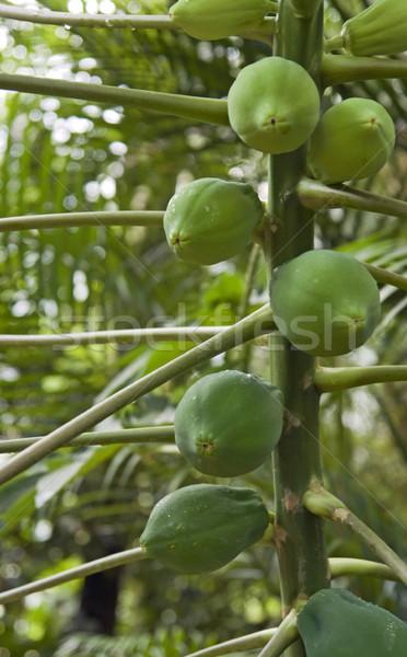 green fruits Stock photo © prill