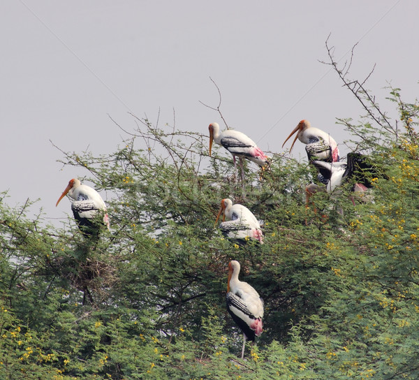 Céu árvore pássaro grupo planta animal Foto stock © prill