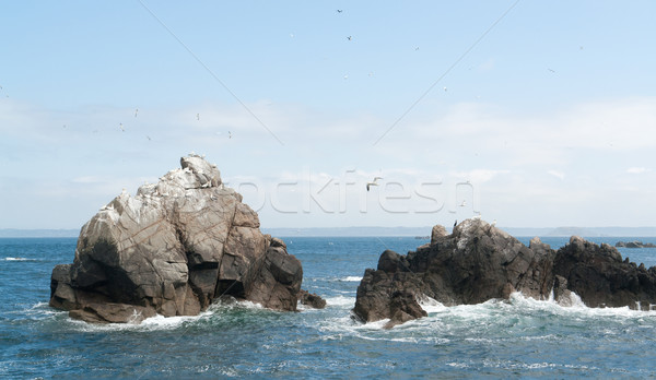 rock formation with some birds at Seven Islands Stock photo © prill
