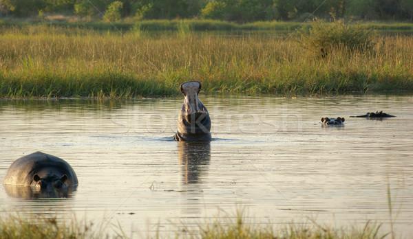 Ботсвана реке игры резерв Африка Сток-фото © prill