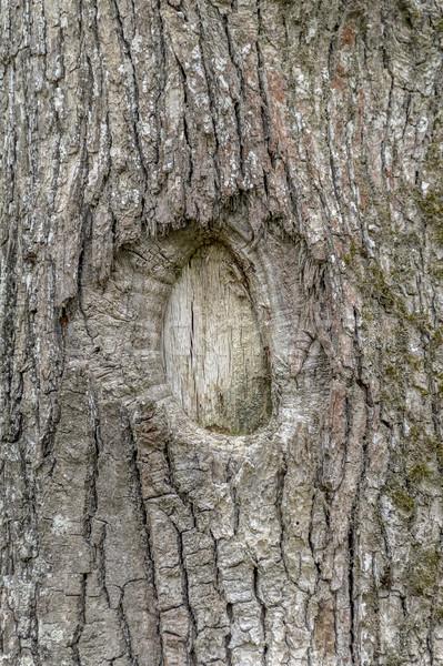 Zdjęcia stock: Naturalnych · kory · szczegół · full · frame · streszczenie · drzewo