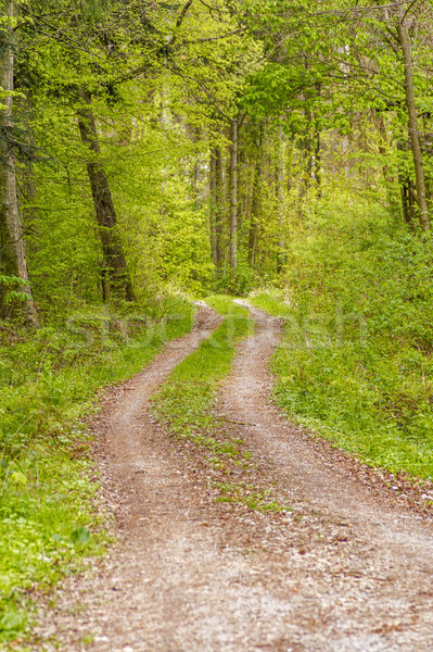 sunny forest scenery Stock photo © prill