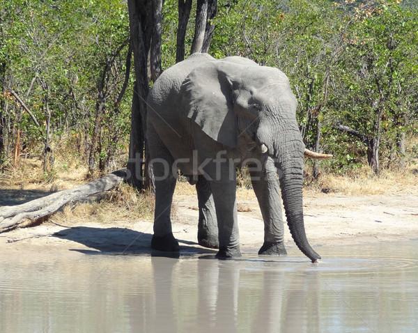 Fil Botsvana su delik oyun rezerv Stok fotoğraf © prill