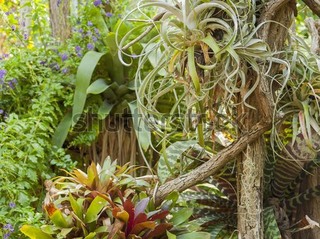 various jungle plants Stock photo © prill