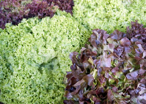 Rosso verde lattuga full frame foglie foglia Foto d'archivio © prill