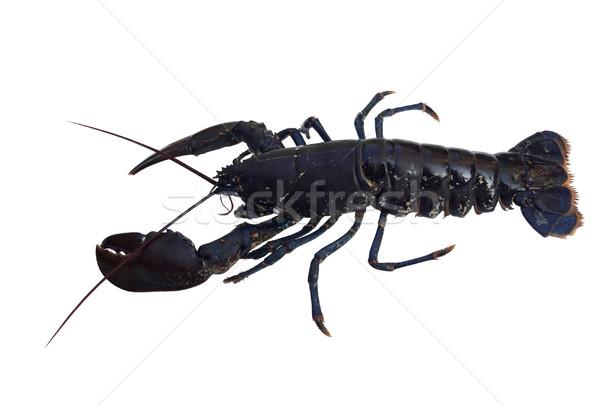lobster Stock photo © prill