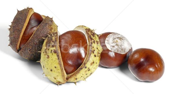 horse chestnuts Stock photo © prill