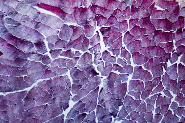 Microscópico pescoço quadro completo tiro Foto stock © prill