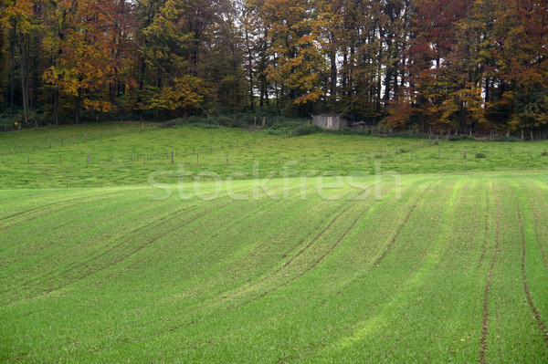rural autumn landscape near a forest Stock photo © prill
