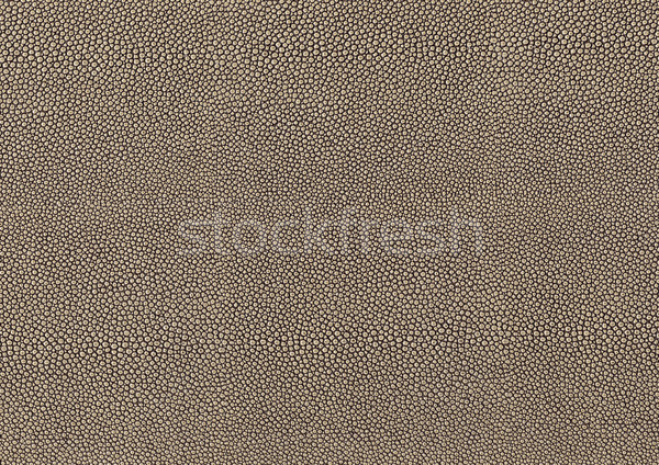 abstract cellular background Stock photo © prill
