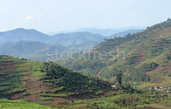 Montagnes Ouganda autour Afrique forêt Photo stock © prill