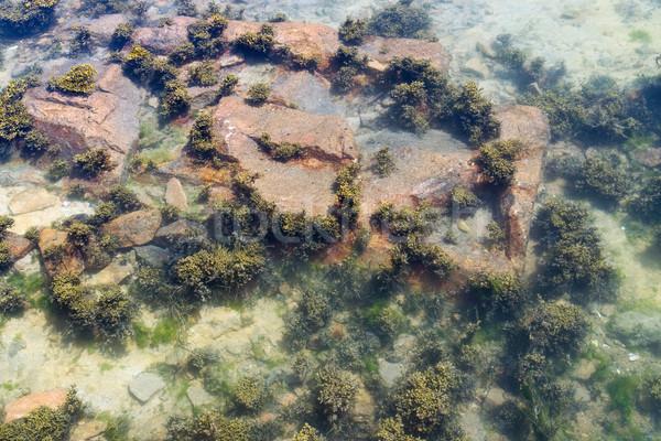 Gelgit detay deniz okyanus yeşil Stok fotoğraf © prill