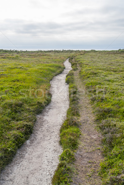 footpath at Pointe de Pen-Hir in Brittany Stock photo © prill