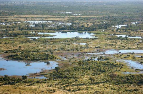 дельта Ботсвана Африка дерево природы Сток-фото © prill