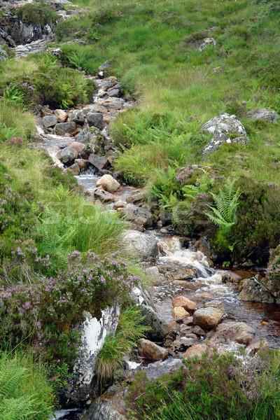 small stream with pebbles Stock photo © prill