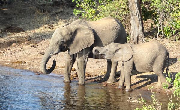 Stok fotoğraf: Filler · Botsvana · manzara · Afrika · su · aile