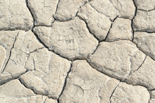 dry soil surface Stock photo © prill
