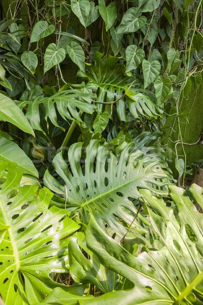 jungle plant background Stock photo © prill