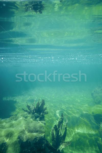 Sualtı manzara mavi yeşil su Stok fotoğraf © prill