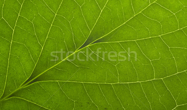 Zielone makro liści full frame szczegół Zdjęcia stock © prill