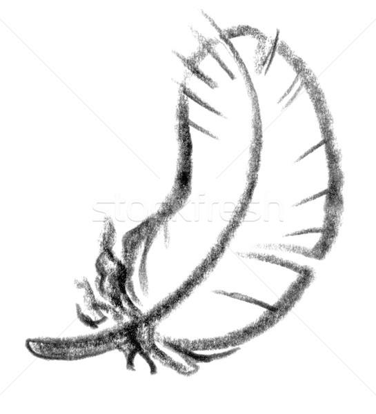 feather icon Stock photo © prill