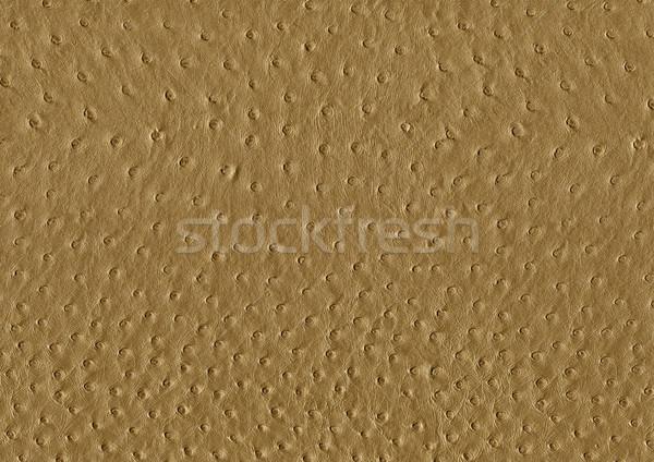 ストックフォト: ダチョウ · 革 · 表面 · フルフレーム · 抽象的な · ブラウン